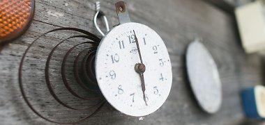 Laiko persukimo istorija: kaip prie to prisidėjo vabzdžiai