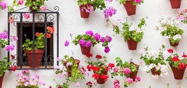 Gražuolės gėlės: komponavimo vazonuose pradmenys