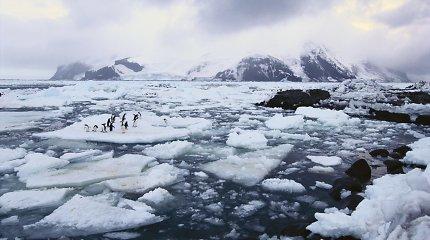 Gigantiškas ledkalnis pražudė 150 tūkst. pingvinų