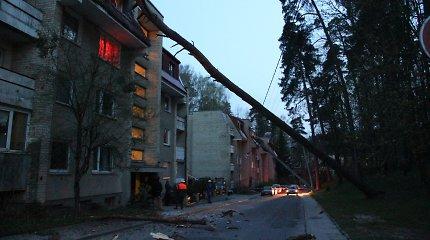 Vilniuje ant namo užvirtusi pušis sulaužė namo stogą