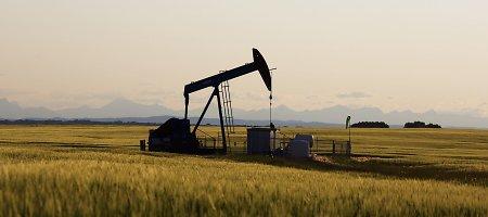 Naftos kainos kopia aukštyn