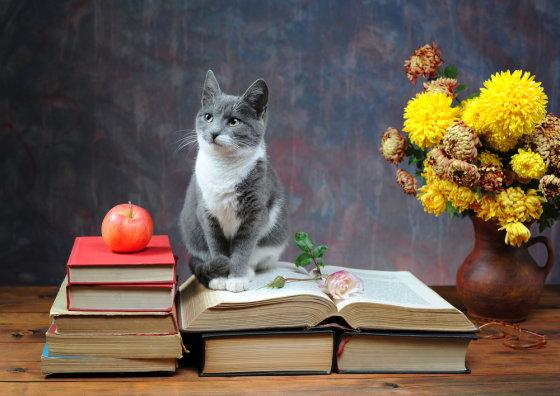 Shutterstock nuotr./Išmintingas katinas.