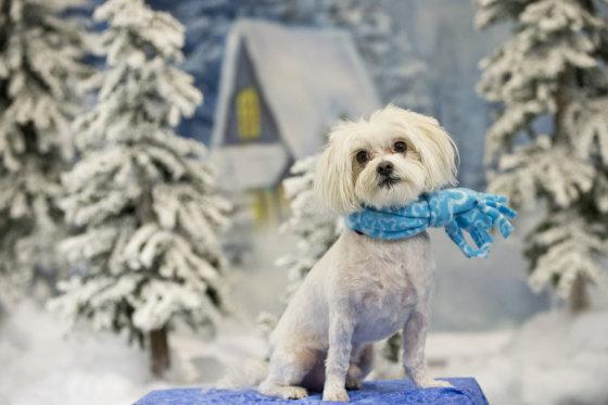 """Shutterstock"" nuotr./Žiema"