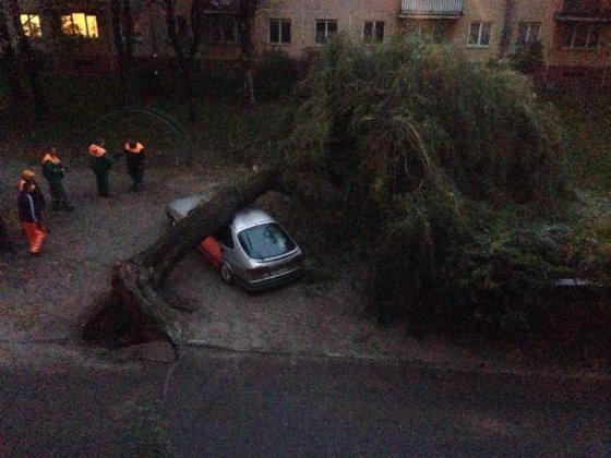 Artūro K. nuotr./Sostinės Gerosios Vilties gatvėje ant automobilio užvirto medis