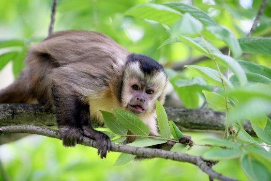 TV3 nuotr./Beždžionėlė vardu Muntis