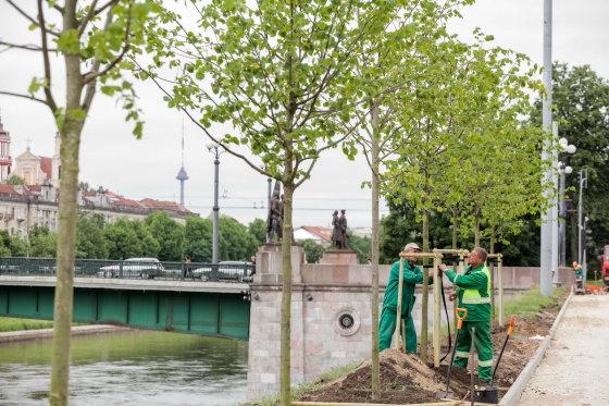Vilniaus savivaldybės nuotr./Sodinamos liepos Žvejų gatvėje