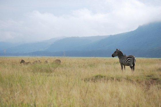 C. S. Patino nuotr./Aplink Nakuru ežerą plytinčiose savanose verda žvėrių gyvenimas.