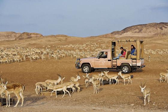 Wikimedia.org nuotr./Dykumų safaris saloje