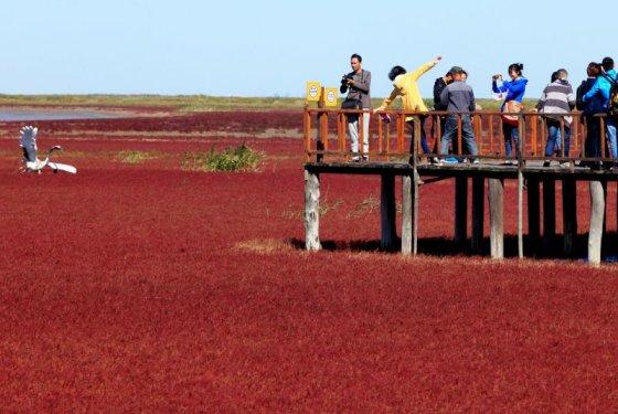 """""""Scanpix"""" nuotr./Raudonasis paplūdimys Kinijoje"""