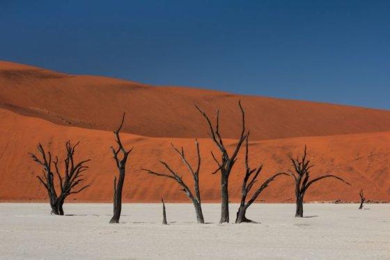 Fotolia nuotr./Medžių kapinės, Namibija
