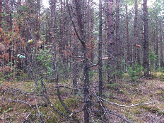 WRC palikimas Lietuvoje