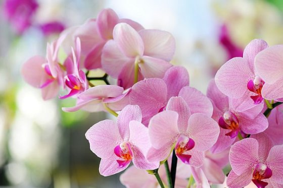 Fotolia nuotr./Orchidėja