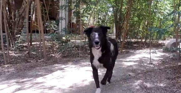 Neįtikėtina transformacija: šuniui ataugo lervų suėstas snukis