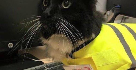 Po penkerių metų darbo stotyje pelių siaubas – katė Felix – pagaliau gavo paaukštinimą
