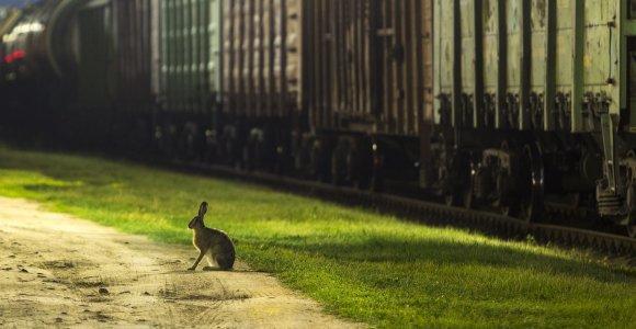 Kybartai. Geležinkelio bėgiais, vedančiais iš nakties
