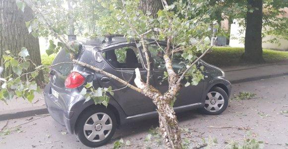 Vilniuje ant automobilio užvirto medis