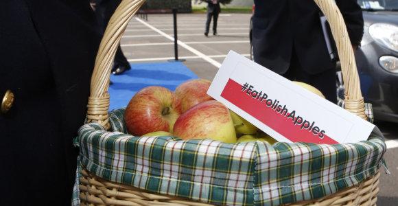 Lenkai nesidžiaugia rekordiniu obuolių derliumi – jo nebus kur dėti