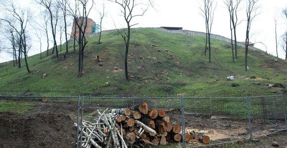 Pjaunami dešimtmečius augę Gedimino kalno medžiai