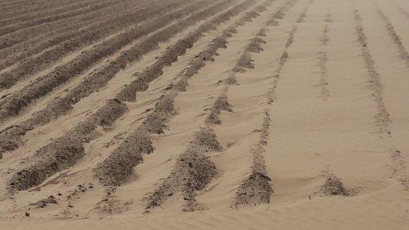15min.lt nuotr./Vėjas pridarė nuostolių vietos ūkininkams.