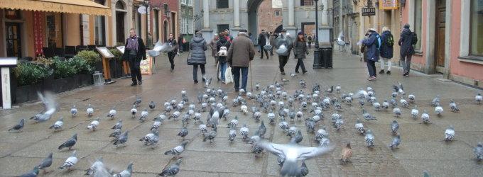 Gdanskas: laisve alsuojantis pajūrio miestas su senelį grindiniu lydinčiais balandžiais