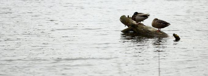 Artimieji nesulaukia žvejoti išėjusio Rokiškio rajono gyventojo