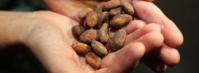Kakavos pupelių kainomis biržoje žongliruojama kaip naftos