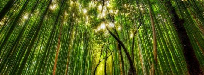 Kai nebaisu pasiklysti: penki įspūdingiausi pasaulio miškai