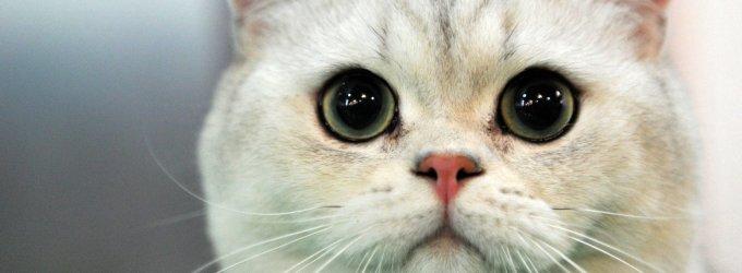 Mokesčių inspektorių taktika Sibire: nesusimokėsite – atimsime kates