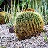 Kolekcininkė apie kaktusus prie kompiuterio: plastikinio poveikis toks pats