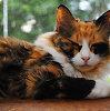 Kaip katės spalva susijusi su jos elgesiu